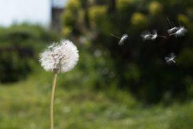 Заговор на ветер