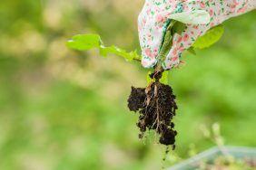 Заговор от разрастания сорняков в огороде