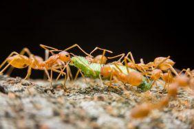 Эффективные заговоры от муравьев