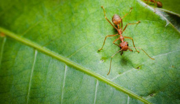 Избавиться от муравьёв реально