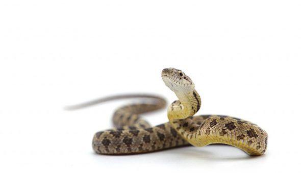 Заговоры и обряды от нападения змеи