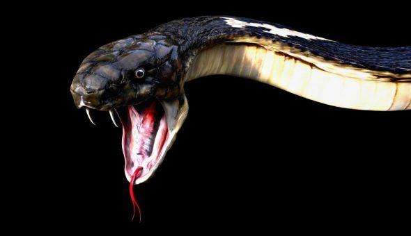 Во многих обрядах применяется шкура змеи