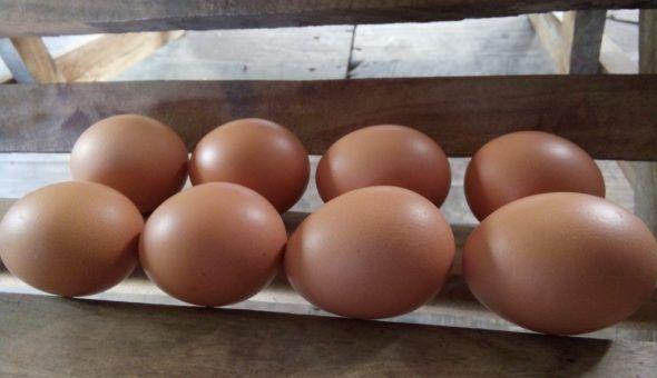 Яйцо поможет снять порчу