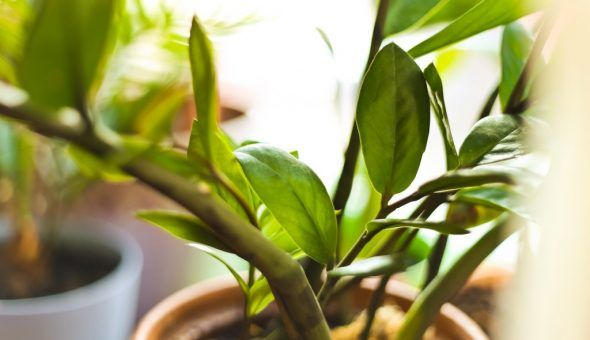Цветение растения сулит прибыль