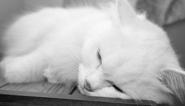 Кот умирает дома