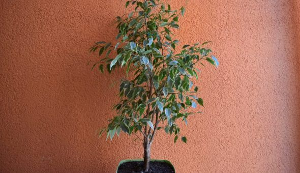 Растение насыщает жилище кислородом