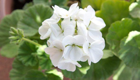 Запах цветка привлекает деньги