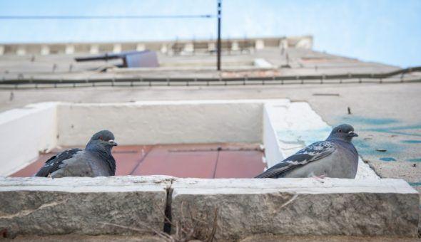 Птица может просто сбиться с пути