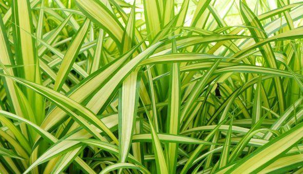 Растение способно удалять из дома аллергены