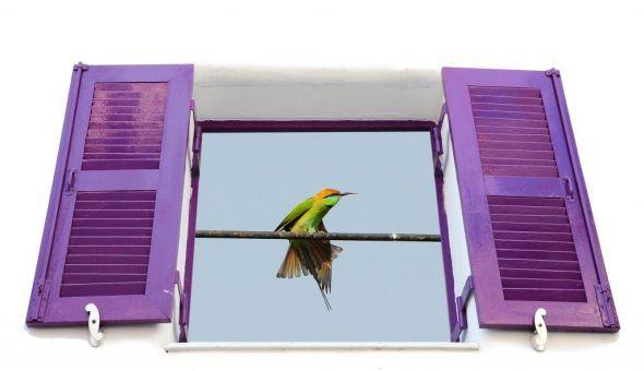 Птица залетела в окно дома