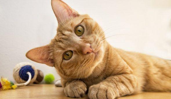 Пришедшую кошку нельзя выгонять