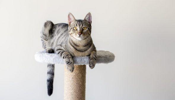 Появление кота в доме несёт новости