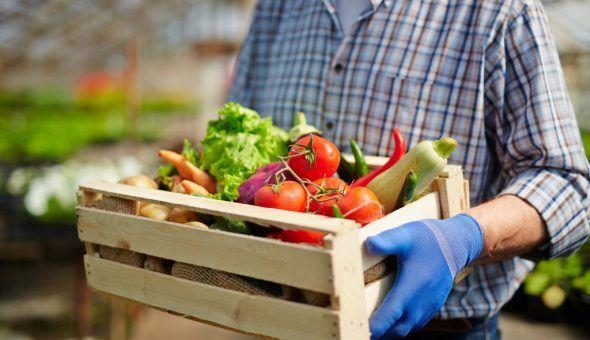 Увеличить плодородность земли не сложно
