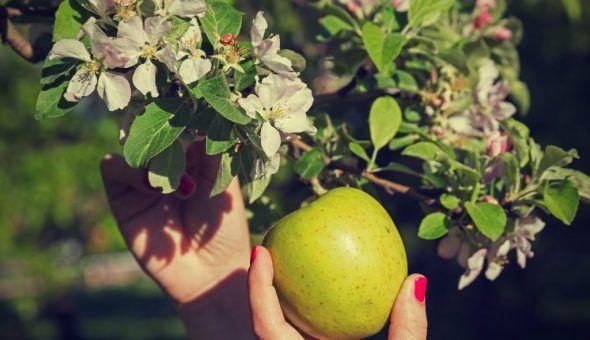 Эффективные заговоры на Яблочный Спас