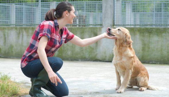 Исцеление собаки происходит долго