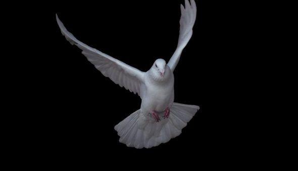 Птица бьётся в окно к новостям