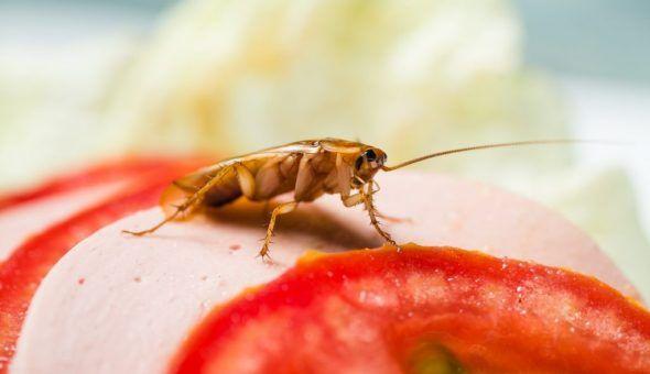 Заговоренный веник избавит от насекомых