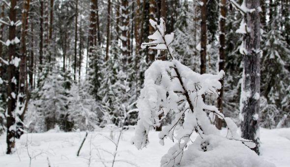 О погоде на весь год можно узнать в Рождество