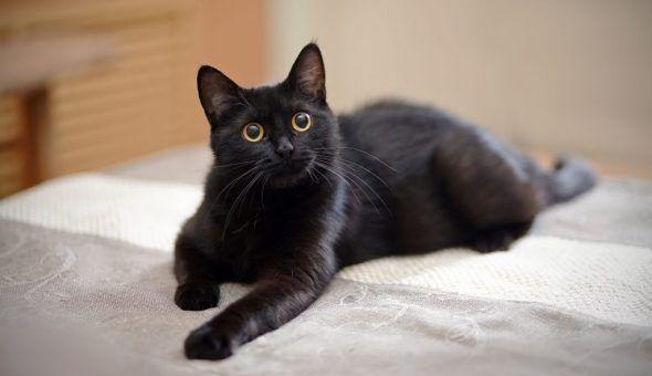 Приметы про черного кота в доме и на пути