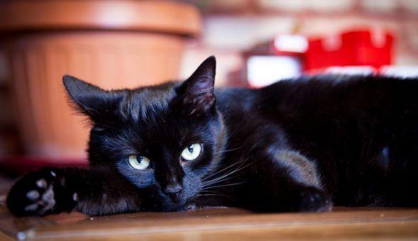 Чёрный кот защищает жилье от негатива
