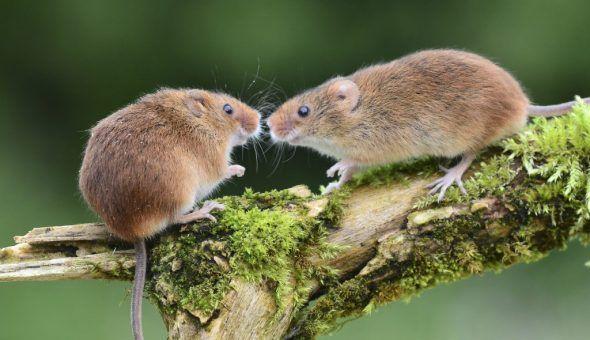 Мёртвая мышь сулит исполнение желаний