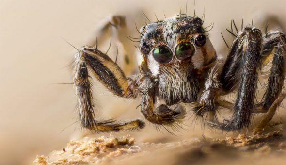 Поведение насекомых может рассказать о многом