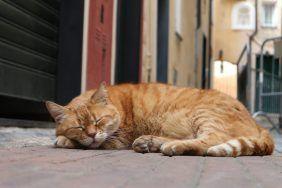 Кошка засыпает на человеке