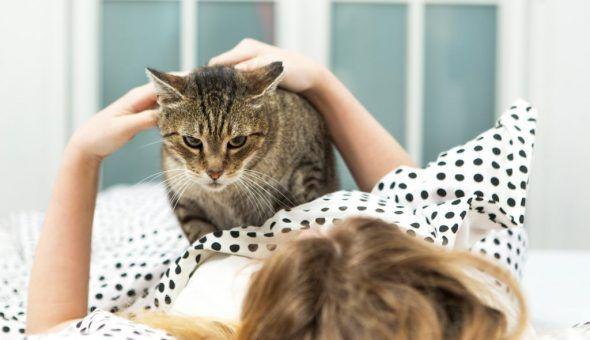 Кошке на вашем животе удобно спать