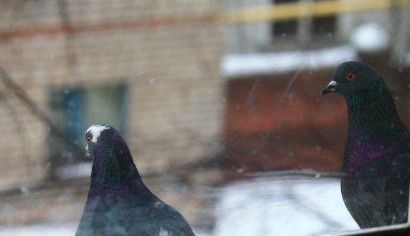 Если птица ударилась в окно