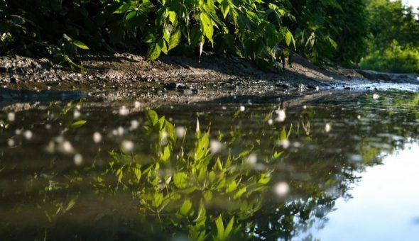 Пузырьки говорят о непродолжительности дождя