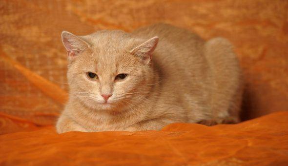 Рыжий кот избавляет от депрессии