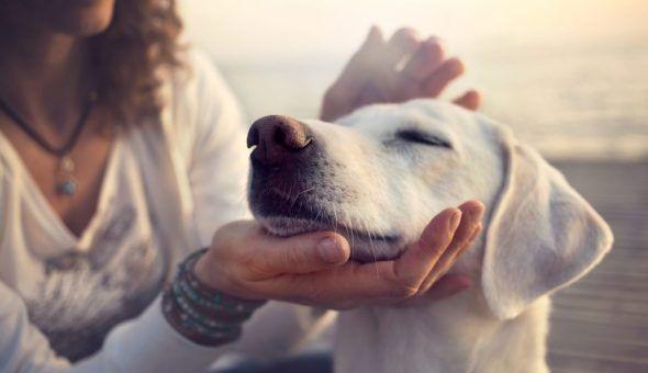 Народные поверья и приметы про собак
