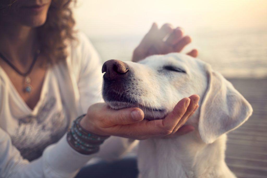 К чему воет собака хорошая или плохая примета