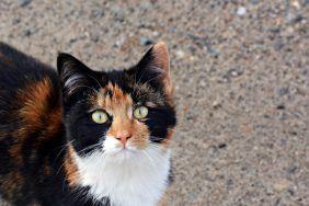 Трёхцветная кошка в доме
