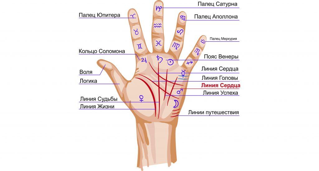 Линии на ладони. Значение на правой руке, что означают линии на ладони левой руки. Расшифровка по хиромантии