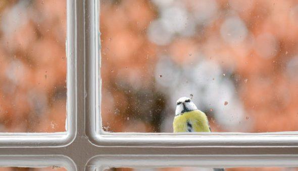 Птица бьется в окно