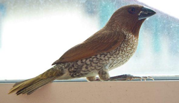 Исход зависит от породы птицы