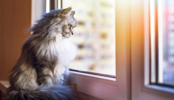 Кошка на подоконнике к не хорошим гостям