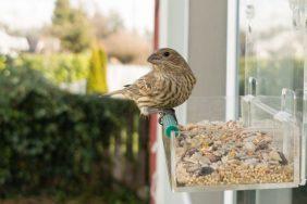 Значение приметы, когда птица села на окно
