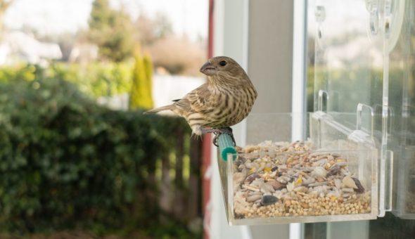 Вид птицы имеет большое значение