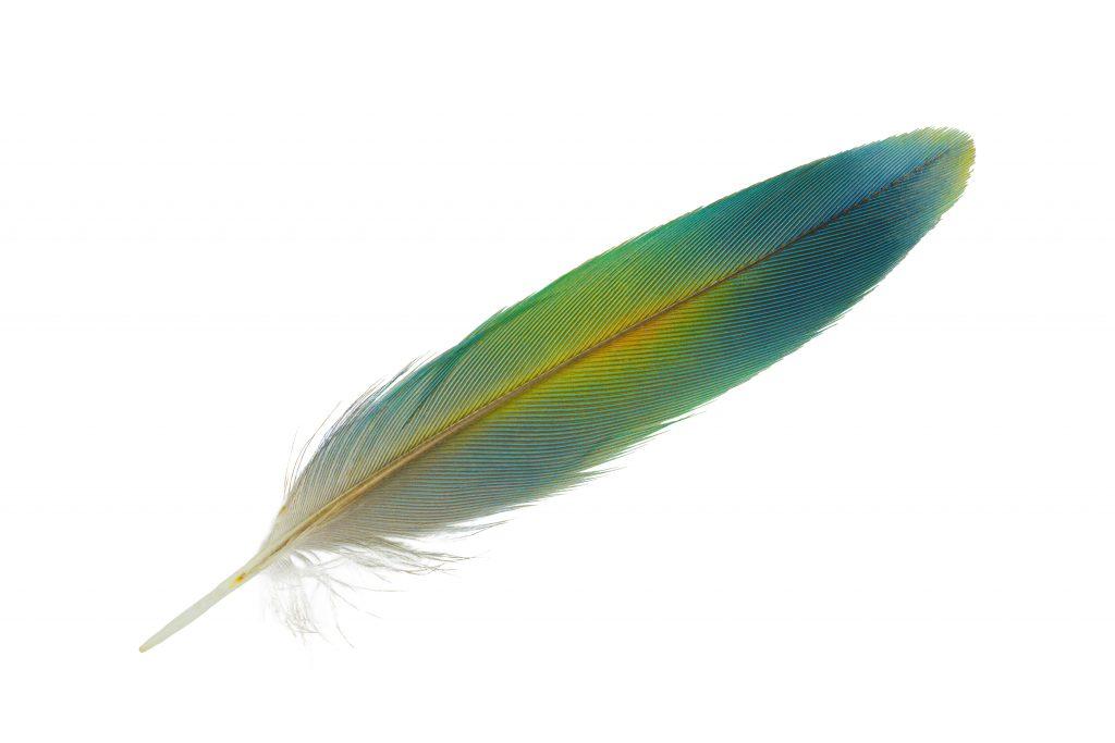 Что означает примета найти перо птицы на улице