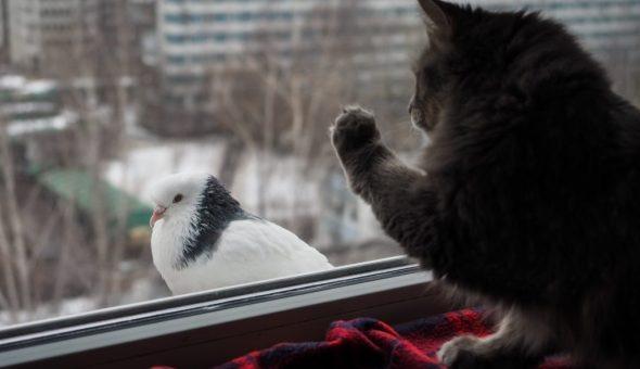 Примета если голубь бьется в окно