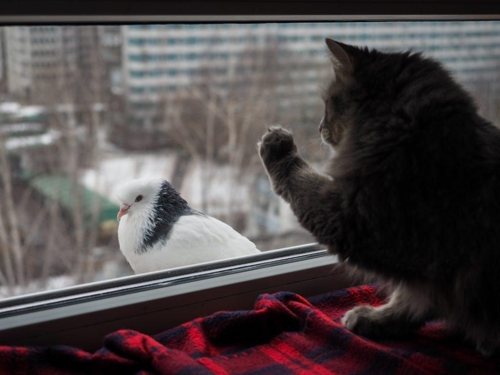 К чему голубь бьется в окно или сел на него: значение приметы