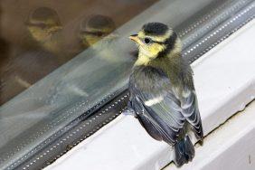 Приметы о стуке птички в окно