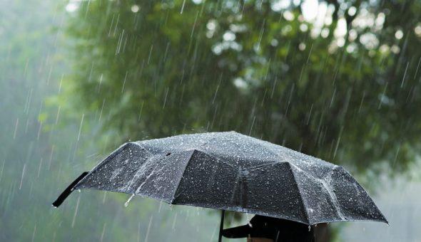 Дождь предсказывает поведение птиц и животных