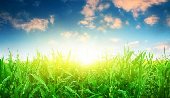 По погоде летом можно предсказать осеннюю