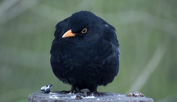 Существующие приметы про птиц