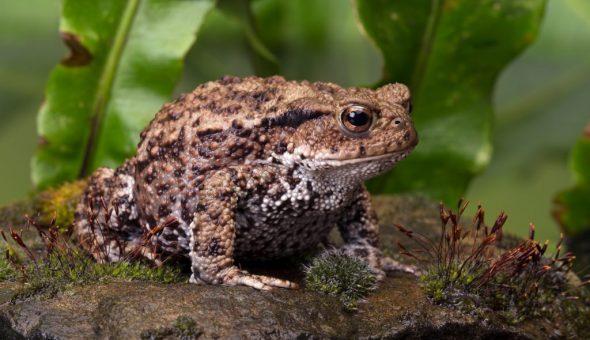 Старинные приметы и поверья о лягушках в доме
