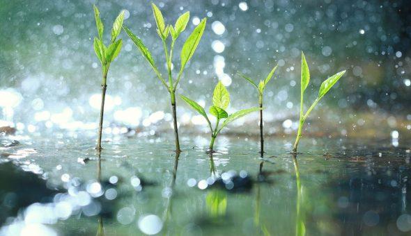 Определяем погоду по растениям