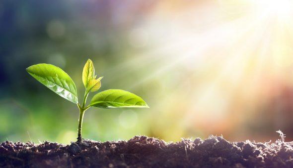 Определение погоды по растению